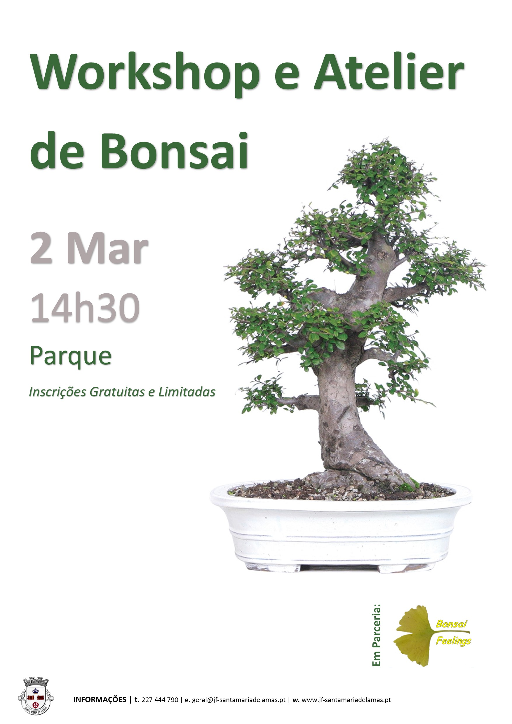 workshop bonsai site